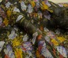 black ~ multicoloured Printed 100% Silk Chiffon Fabric