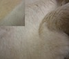 beige Soft Lamb Fur ~ Suede Fabric Two-Sided